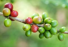 Sustainable Coffee Purchase Reporting