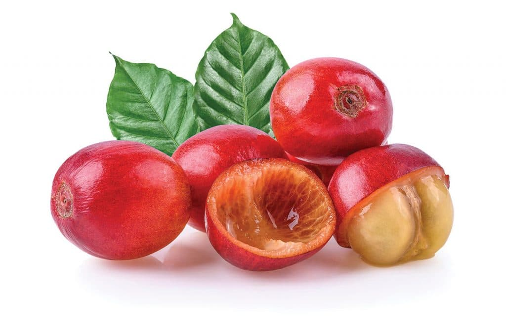 Continuous Coffee Cherry processing