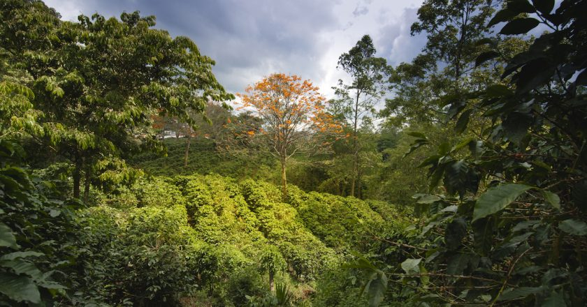 World coffee production down