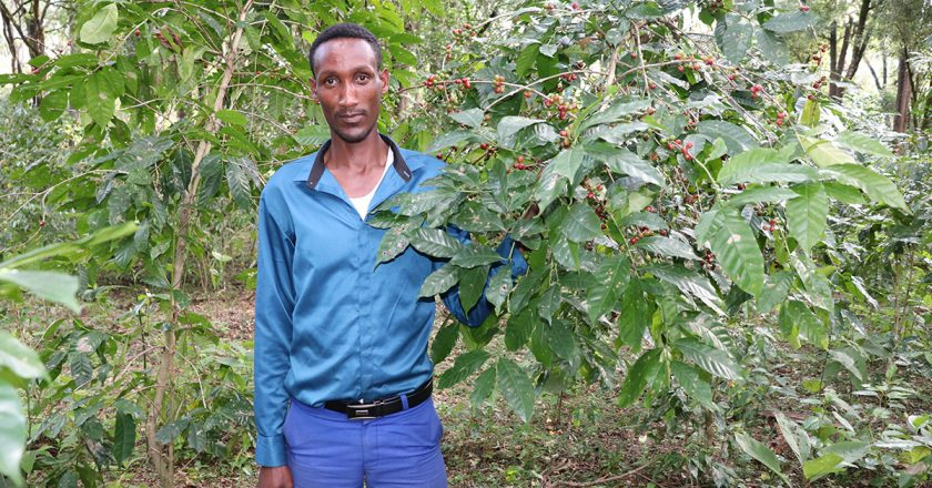 Ethiopia's Forest Coffee