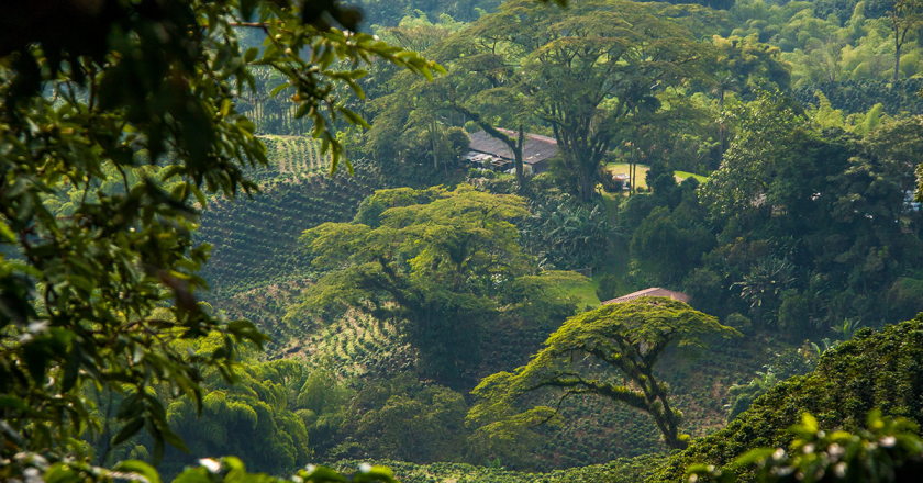 The Coffee Forest & Climate Agreement